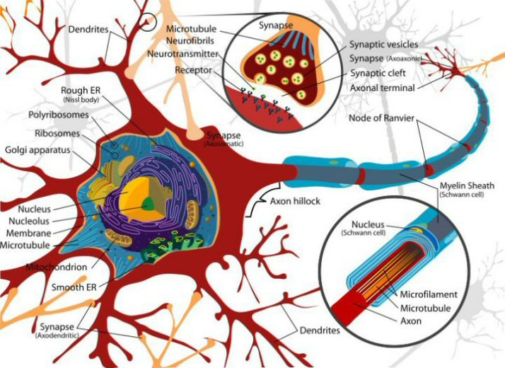 Gambar biologi